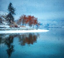 Frosted Reflections by Tara  Turner