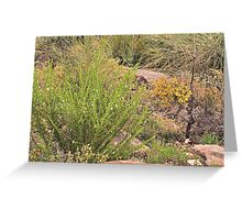 Keiser Park collection 3 Greeting Card