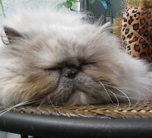 Sleepyhead by Gloria Abbey