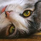 Cats Eyes by Peter Williams