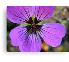 High-Brow Purple Macro Canvas Print