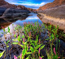 Bloom in the Rock Canal by Bob Larson