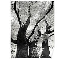 Tree Three Poster