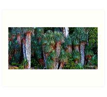 Pandanis Palms - Cradle Mountain National Park, Tasmania Art Print
