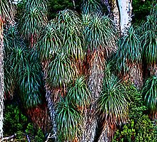Pandanis Palms - Cradle Mountain National Park, Tasmania by Ruth Durose