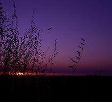 Sunset Through The Grass by mattsibum