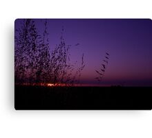 Sunset Through The Grass Canvas Print