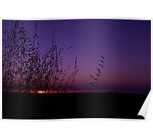 Sunset Through The Grass Poster
