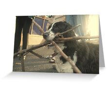Dog of wonder.  A mouth of sticks and the house of loyalty    2darts, . Greeting Card