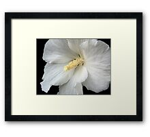 Beauty, unaccompanied by virtue, is as a flower without perfume. Framed Print