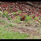 Birdsowun by kayesem