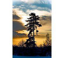 Winters Tree! Photographic Print