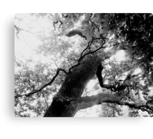 Noise of the leaves Canvas Print
