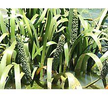 Grasses Green Photographic Print
