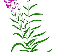 Willow-herb by Holgerd
