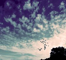 Purple haze by salwaosman