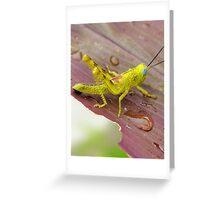 HDR Grasshopper Greeting Card