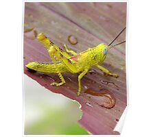HDR Grasshopper Poster