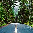 US Highway 101, Redwood National Park by Bryan D. Spellman