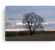 Lonely tree in sunrise Canvas Print