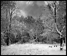 Hertford Heath - 1 (Winter) by MoGeoPhoto