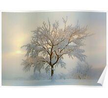 Snowy dream Poster