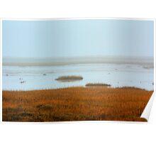 costal wetlands Poster