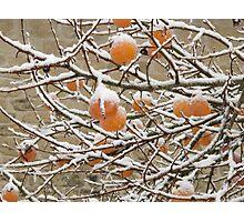 Snow and Kaki Fruit Photographic Print