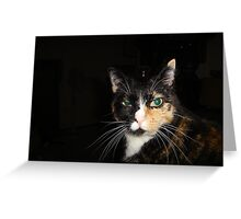 Kiss my What? Disdainful Tortie Calico Cat Greeting Card