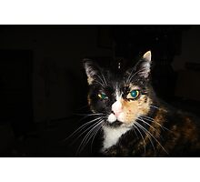 Kiss my What? Disdainful Tortie Calico Cat Photographic Print