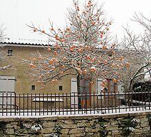 Kaki Tree by Pamela Jayne Smith