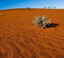 Red Dunes of Central Australia by Dilshara Hill