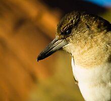 Butcher Bird by Dilshara Hill