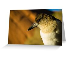 Butcher Bird Greeting Card