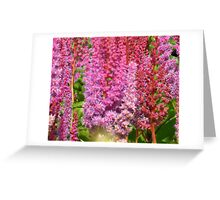 Pink Stalks Greeting Card