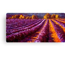 Provençal Home in the Lavender Canvas Print