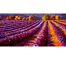 Provençal Home in the Lavender Photographic Print