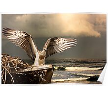 Full Wingspan & Ready to Fly Poster