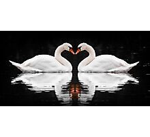Swans Photographic Print