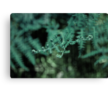 Your Delicate Touch Canvas Print