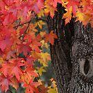 Autumn Blush by Georgie Hart