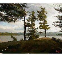 "Achray Pines  (2009)   - 30""x24"" max print size Photographic Print"