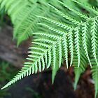 Fern Frond by Jeff Hobbs