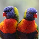 Love Birds by Jeff Hobbs
