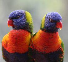 Love Birds by Jeff Hobbs