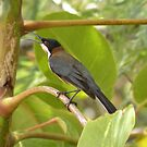 Eastern Spinebill by Trish Meyer