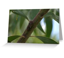 Sicarda on tree branch Greeting Card