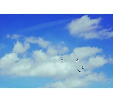 Blue Skies and Fluffy White Birds Photographic Print
