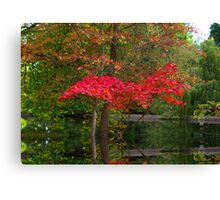 Acer Reflections Canvas Print