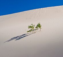 Sand dune - Mungo National Park by Rowan Herring